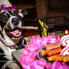 patches 2-year old birthday dog-0190
