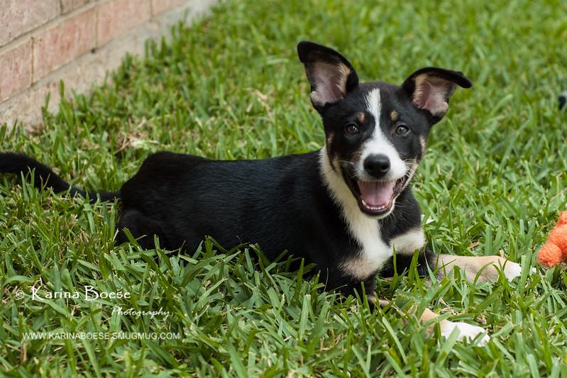 casey puppy-1637