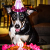 patches 2-year old birthday dog-0206