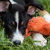 casey puppy-1656