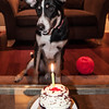 patches 1_year old birthday-2273