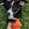 casey puppy-1645