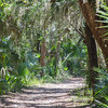 Trail at Washington Oaks State park