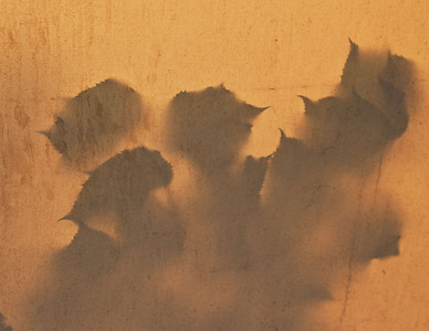 Leaf shadows on canvas.