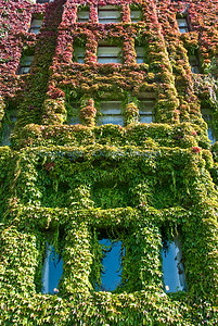 B patterns ivy