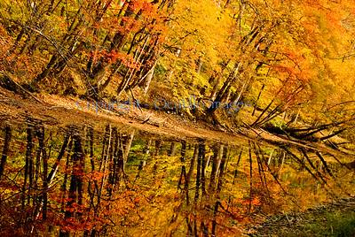 A landscape foliage diagonal