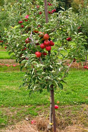 Patterson Fruit Farm 10/2013