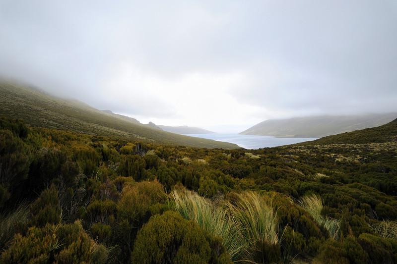 A foggy day on Campbell island.