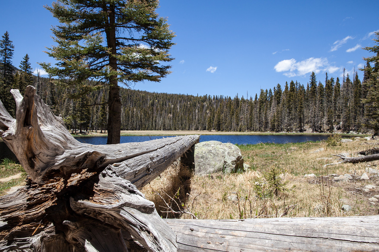 Pond near Stewart Lake.