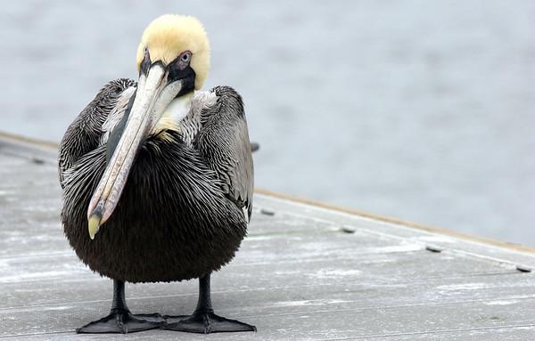 Pelican's: Jensen Beach FL - Feb '06