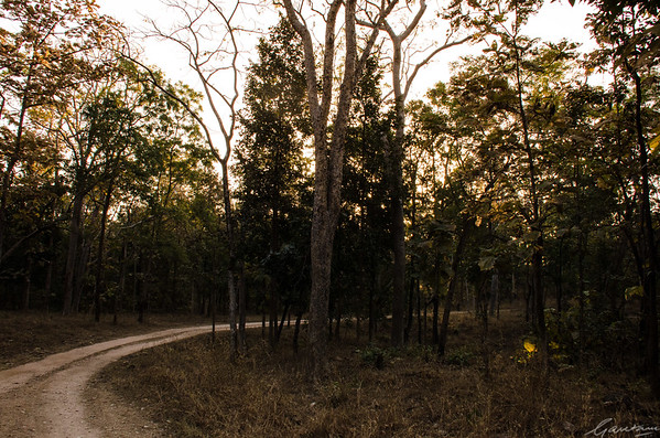 Forests, Pench National Park