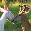 """"""" Love Me Tender""""   Photo in Our Wisconsin Magazine 2013 February & March Issue."""