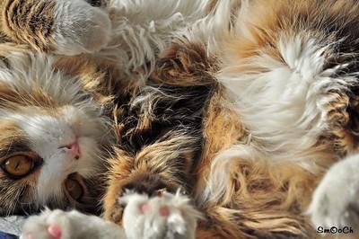 Peppino... my cat!