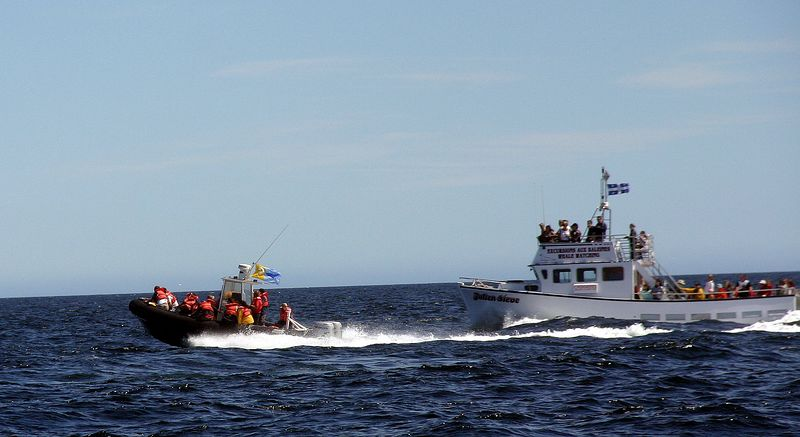 Catching up with whales<br /> 一旦发现鲸鱼,所有的船立刻掉头追赶上去。老渔船总是落在最后。