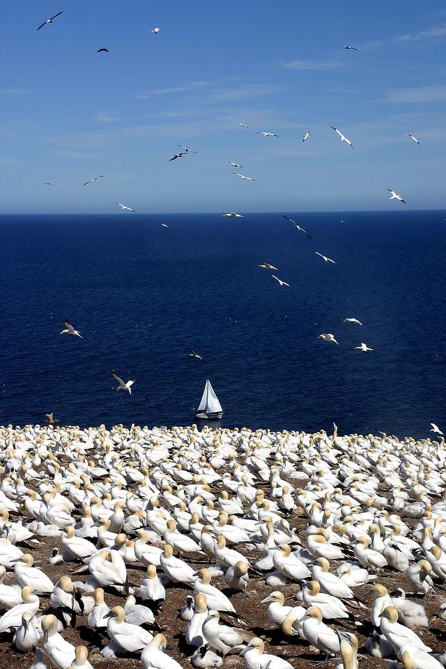 Sailing beside Birds<br /> 鸟岛