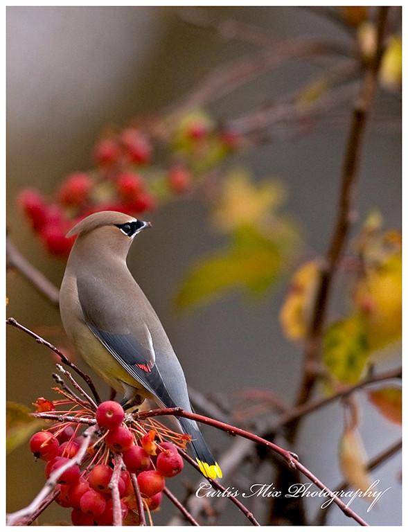 Colors of Autumn.