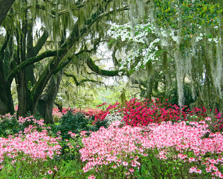 Lowcountry Spring