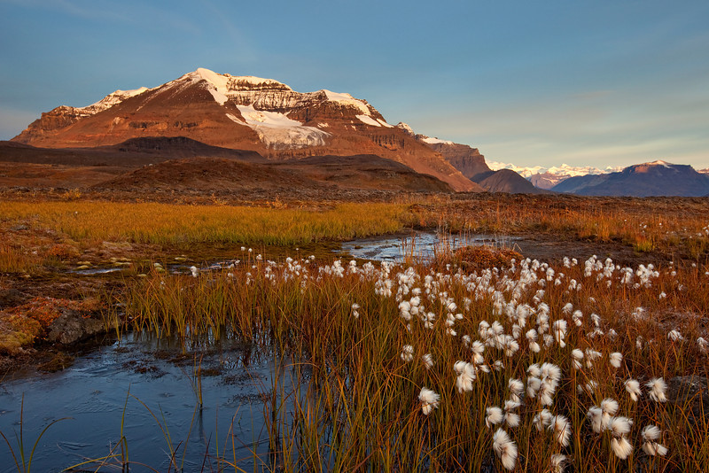 Cotton Grass and Tundra - Wrangell-St. Elias National Park, AK