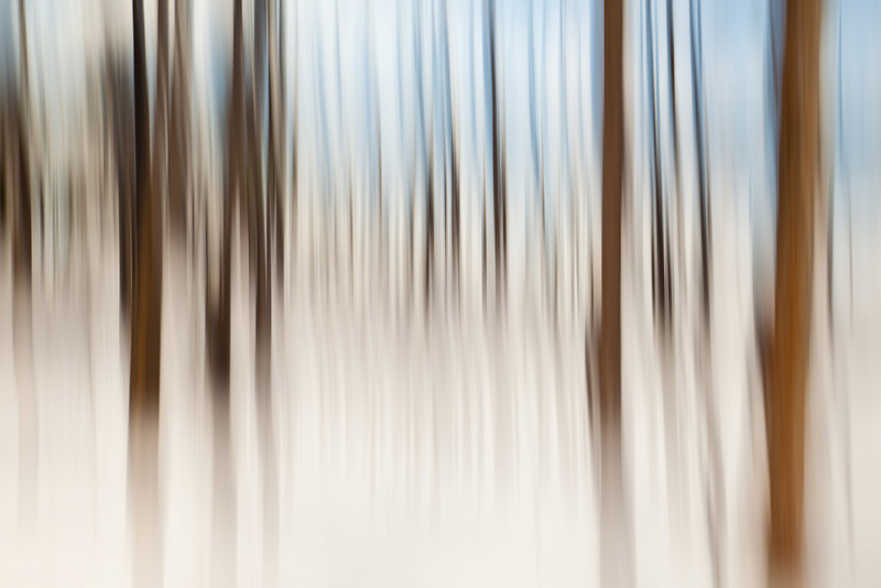 More Abstract Lodgepoles in Winter