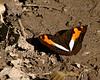 butterfly mystery 10