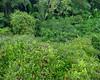 Amazonas canopy 1