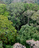 Amazonas tower canopy