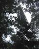 Amazonas canopy tower July 26