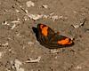 butterfly mystery 9