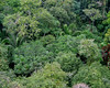 Amazona canopy 2