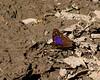 butterfly mystery 8