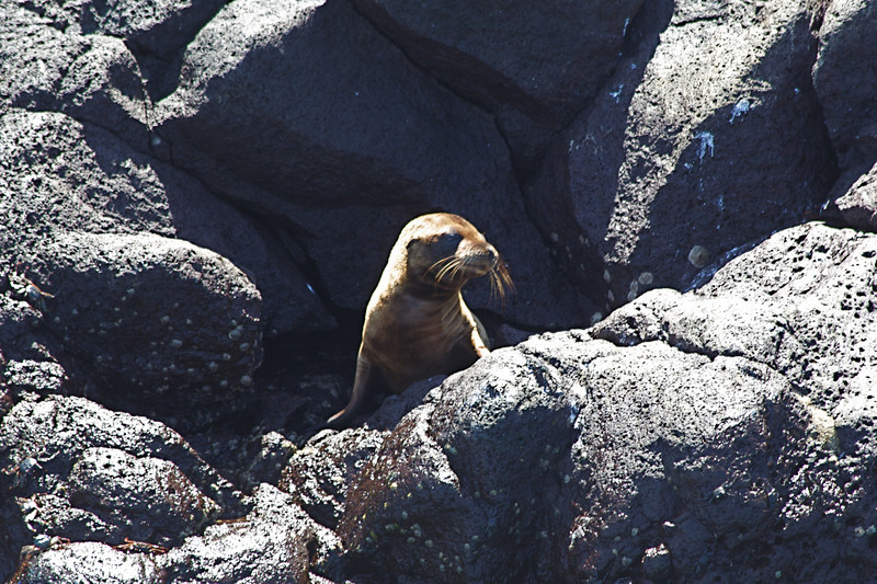 Baby fur seal? in safe place waiting for its mother