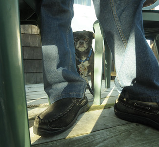 Bear is not sure about me.  He wags his tail at me and barks from across the street.  When I come over to visit he becomes unsure of the situation....probably because of the camera.  Here he peers out from behind his owner's legs, Bruce Keating.