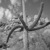 Pinnacle Peak 9-22-10 BW Cactus