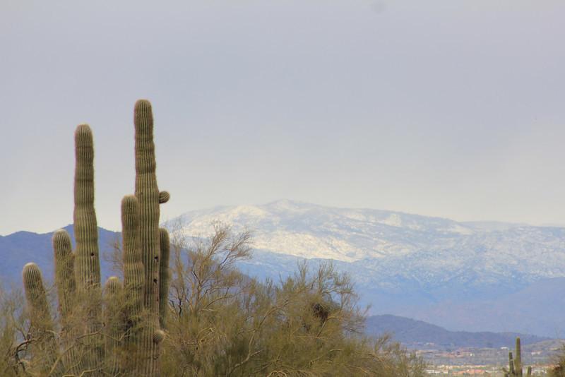 12-30-10 Snow Mtns Phx 4