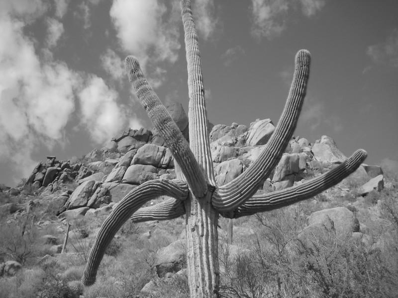 Pinnacle Peak 9-22-10 BW Cactus 1