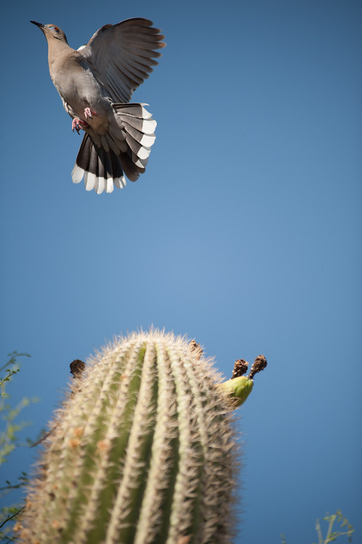 Phoenix Natural World