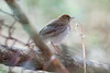 VEERY_Scott Whittle_140421_170036