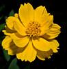 Bok Tower Gardens - Marigold