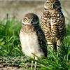 Juvenile and parent