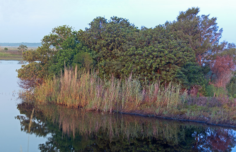 Panorama Photo  of the St John's River -  I stitched 3 verticals photos together.