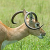 Lion Country Safari - Loxahatchee, FL - Aolidad, That tastes really great!