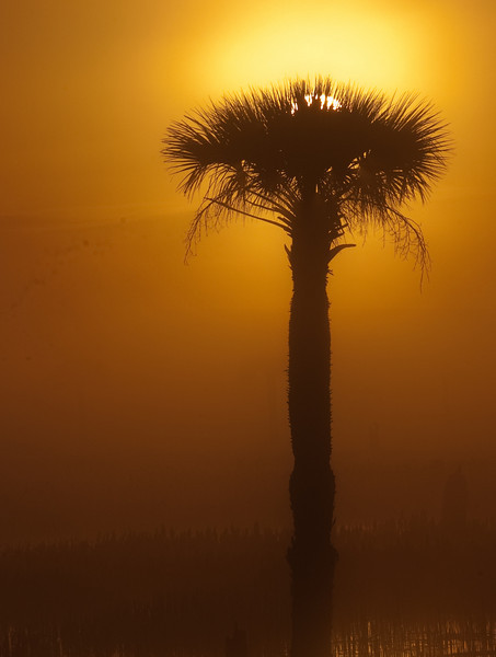 Viera Wetlands - Foggy morning back lit scenery