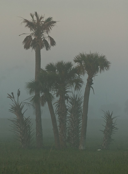 Viera Wetlands - Foggy morning