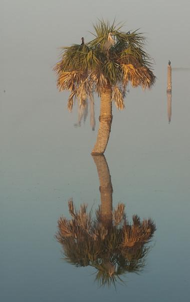 Viera Wetlands - morning reflections