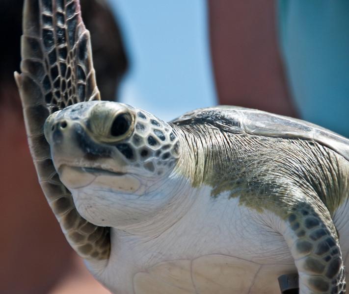 Green Turtle - Bye!