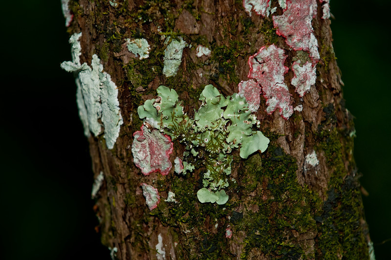 Various colored lichen