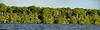Cypress Trees - I took 4 photos for this panorama but only 2 of the photos would stitch together since the boat was moving so much