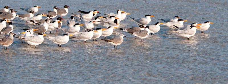 Gulf of Mexico Beach - Group of various birds
