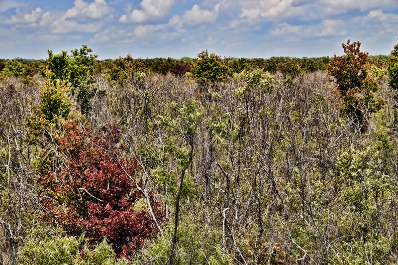 Corkscrew Swamp Sanctuary - View from the boardwalk