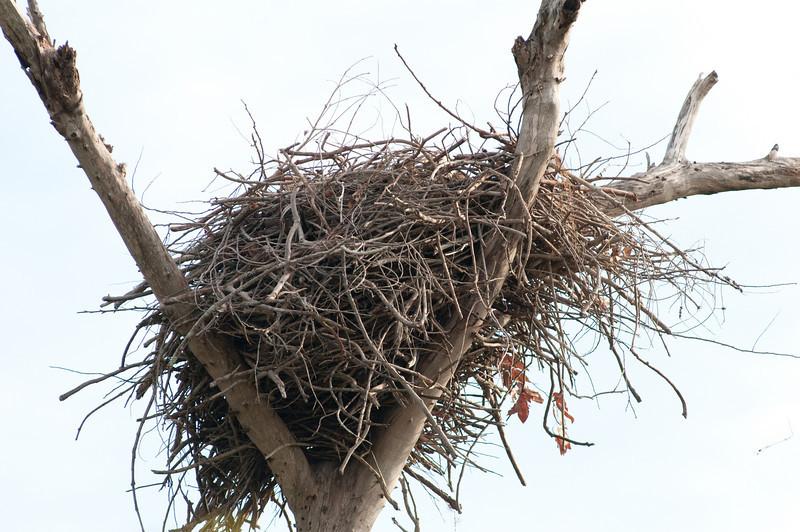 Palm Beach Eagle's Nest